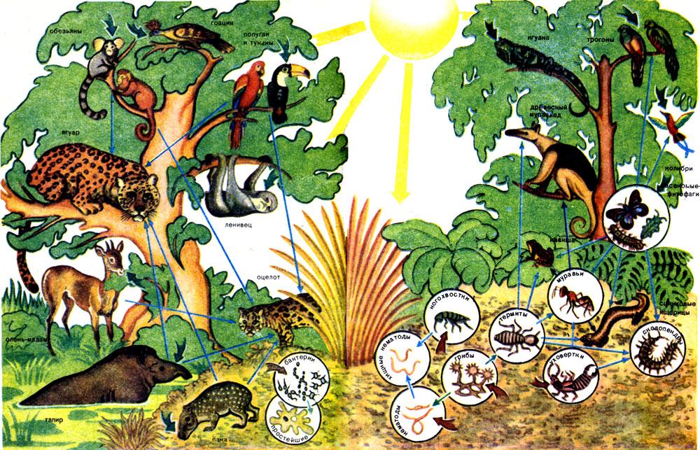 ...биогеоценозе тропического